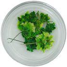 Zelené sušené kvietky