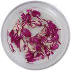 Sušené kvety - ružovo-biele