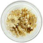 Biele kvety na nechty - sušené
