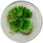 Sušené kvety - zelené