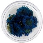 Tmavomodré kvety na nechty - sušené